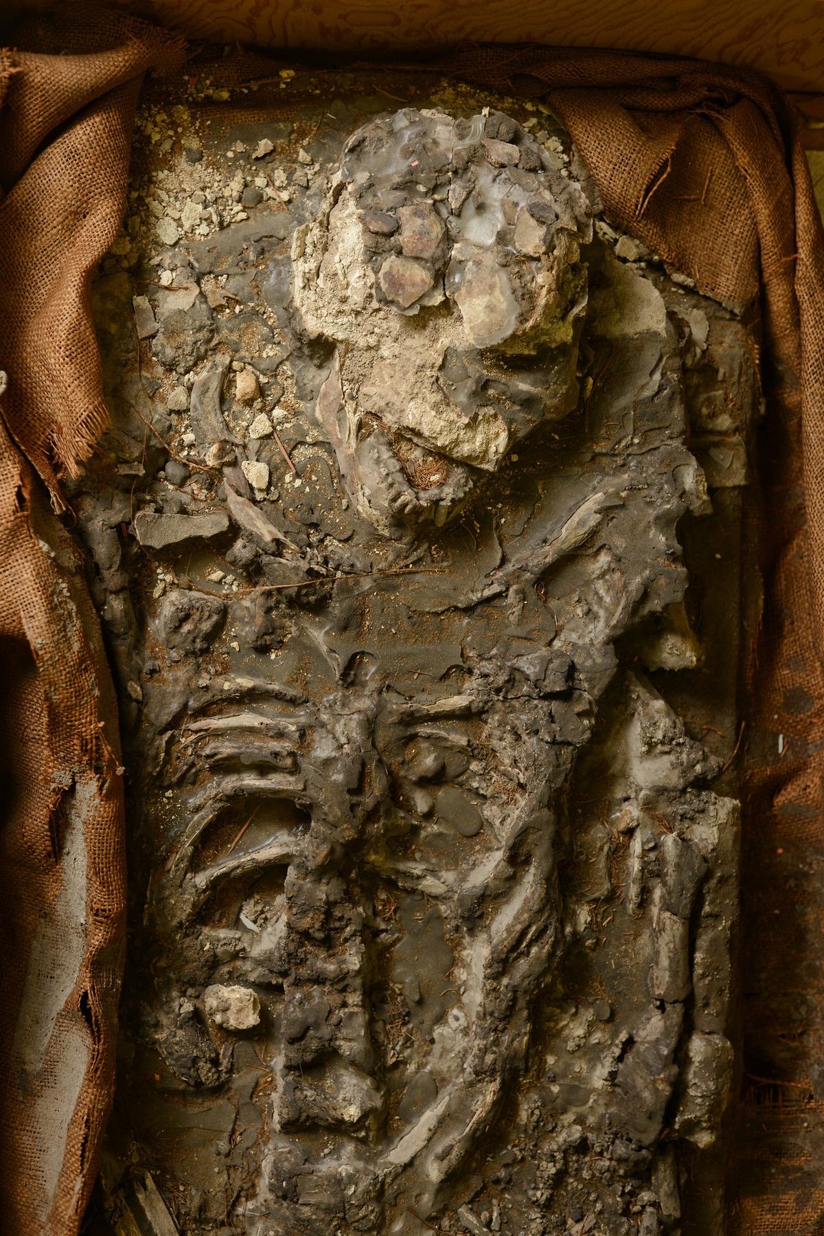 Tìm thấy xác chết 6.500 tuổi dưới tầng hầm viện bảo tàng