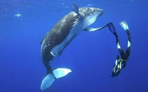 Thích thú với trải nghiệm lặn ngắm cá voi