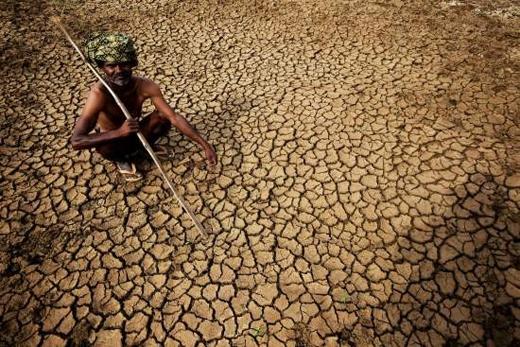 Các cánh đồng đều nức nẻ, không một giọt nước
