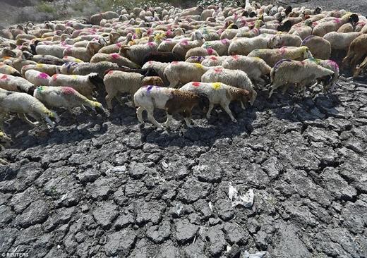 Các động vật gần chết khát vì không có nước uống