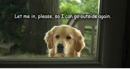 """""""Cho em vào nhà đi, em hứa em sẽ ra ngoài lại ngay thôi"""".(Nguồn: 9gag)"""