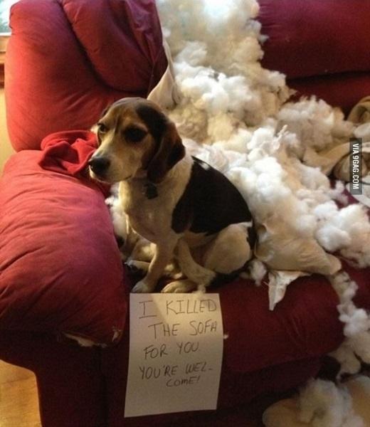 """""""Em đã tiêu diệt yêu quái sofa cho chị rồi đó. Khỏi cảm ơn nhé!""""(Nguồn: 9gag)"""