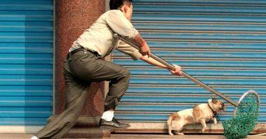 Nạn trộm chó cưng đòi tiền chuộc ở Việt Nam lên báo Anh
