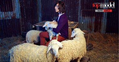 """Top 12 Vietnam's Next Top Model """"lột xác"""" ấn tượng bên những chú cừu"""