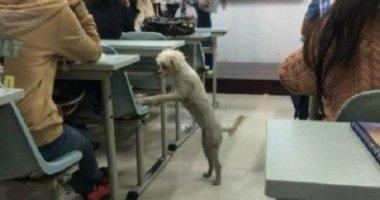 Sinh viên phẫn nộ vì chú chó ham học bị giết chết