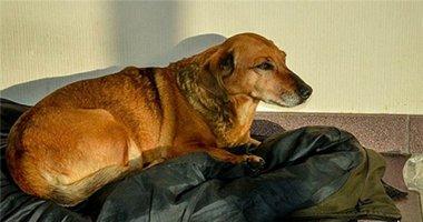 """Câu chuyện chú chó """"Hachiko ở Nga"""" khiến dân mạng rơi nước mắt"""