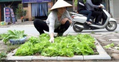 Nuôi gà, thả cá, chăn lợn trong nhà cao tầng ở Hà Nội