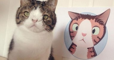 """Gặp gỡ Monty """"mũi tẹt"""" – chú mèo mặt ngố siêu cute"""