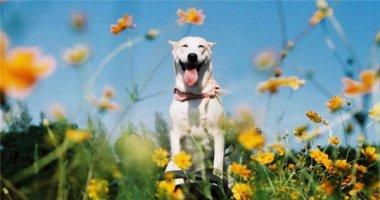 """Gặp gỡ chú chó có """"nụ cười tỏa sáng"""" nhất thế giới"""