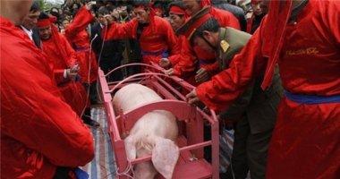 Lễ hội chém lợn ở Việt Nam lên báo nước ngoài