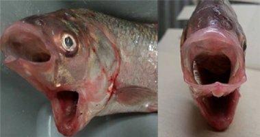 Bắt được cá hai miệng ở Australia