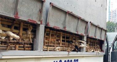 Hà Nội: Gần 3 tấn mèo bị tiêu hủy
