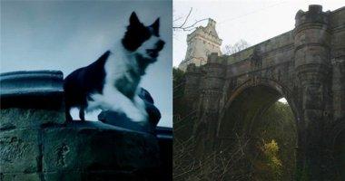 """Rùng mình cây cầu bí ẩn khiến hàng trăm chú chó nhảy xuống """"tự tử"""""""