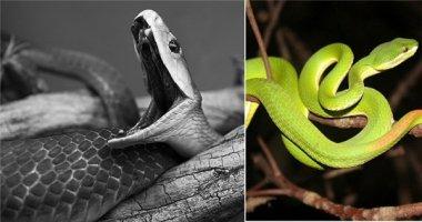 Cách sơ cứu khi bị rắn độc cắn: Bí kíp không thể bỏ qua!