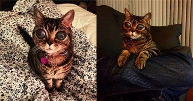 Choáng với chú mèo có đôi mắt như người ngoài hành tinh