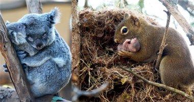 """Thích mê với loạt ảnh """"cả nhà thương nhau"""" trong thế giới động vật"""