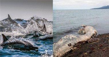 """Ớn lạnh trước """"quái vật biển"""" khổng lồ trôi dạt vào bờ"""