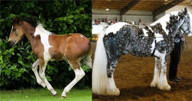 """Trầm trồ những chú ngựa có bộ lông """"hàng độc không đụng"""""""