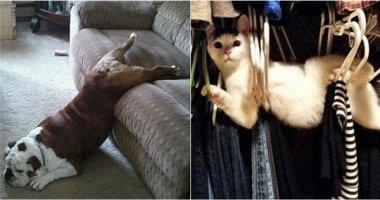 """Bật cười với những tư thế """"khó đỡ"""" của động vật khi ngủ dậy"""