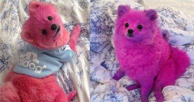 Cô gái bị chỉ trích kịch liệt vì nhuộm chó thành màu hồng