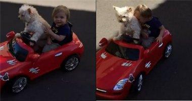 """Tranh cãi quanh clip chú chó lái xe """"gây sốt"""" cộng đồng mạng"""