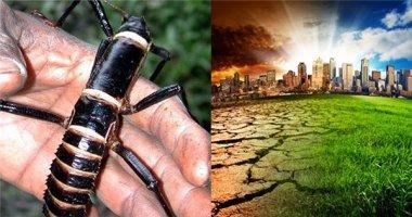 """Sự thật """"không thể tưởng tượng nổi"""" khi côn trùng biến mất"""