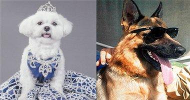"""""""Há hốc mồm"""" trước gia tài của những chú chó giàu nhất thế giới"""