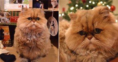 """Sững sờ với biểu cảm của chú mèo có bộ mặt """"thất tình"""""""
