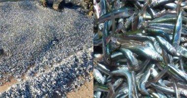 Hàng ngàn con cá chết và trôi dạt khiến người dân hoang mang