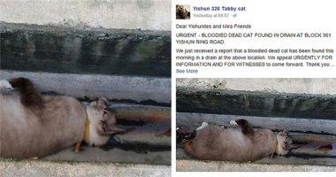 Cộng đồng mạng tức giận vì hàng loạt mèo bị hành hạ đến chết