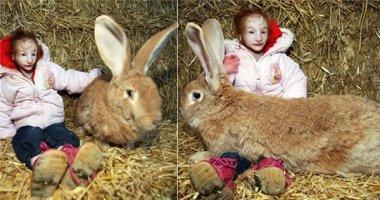 Sửng sốt trước bé gái có vóc dáng nhỏ hơn cả con thỏ