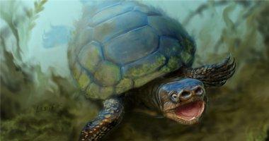 Tìm thấy hóa thạch của loài rùa mũi lợn đã tuyệt chủng