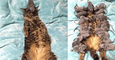 """Hình ảnh chú mèo ngủ say bị cả đàn chuột """"tấn công"""" gây sốt mạng"""