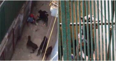 Kinh hoàng chó nuôi lao vào cắn xé chủ nhân ở Hà Nội