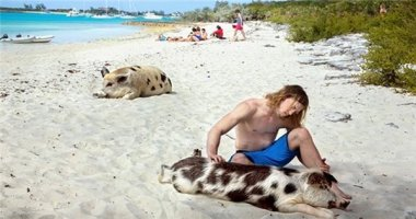 Phát sốt với hòn đảo có đầy lợn biết bơi, giỏi xin ăn du khách