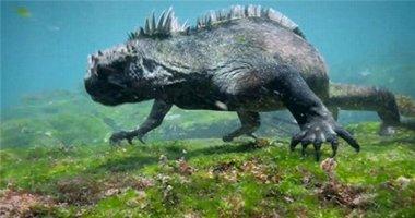 """Tìm thấy """"hậu duệ"""" của quái vật Godzilla huyền thoại?"""