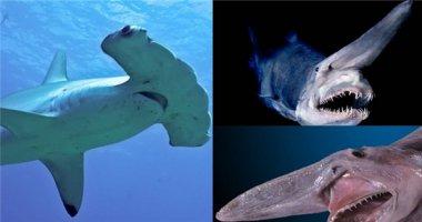 10 loài cá mập có hình thù kì lạ nhất thế giới