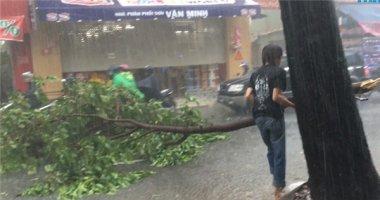 """Lao ra dọn nhánh cây gãy giữa trời mưa và chữ """"ngu"""" từ cư dân mạng"""