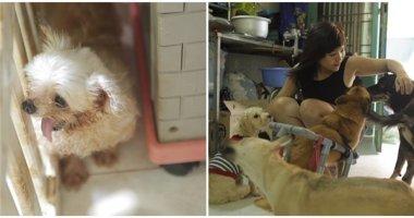 Câu chuyện của cô gái cưu mang những chú chó khuyết tật bị vứt đi