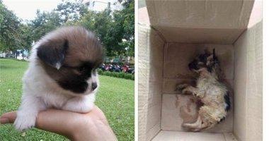 Phẫn nộ cô gái mua chó sống nhận chó chết, biết đòi ai bồi thường?