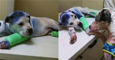 Xúc động chú chó bệnh an ủi bạn bị thương nặng
