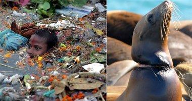 Loạt ảnh chấn động thế giới về đại dương rác