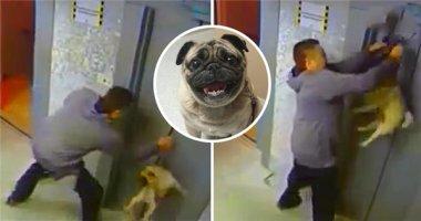 """Video """"anh hùng cứu chó thoát tai nạn thang máy"""" sẽ khiến bạn ấm lòng"""