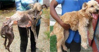 Rơi nước mắt trước chùm ảnh trước và sau khi cún hoang được nhận nuôi