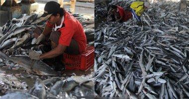 Sốc với cảnh hàng ngàn con cá mập bị tùng xẻo nằm la liệt giữa chợ