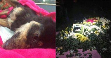 Phẫn nộ với lí do nhân viên bảo vệ giết chết chú chó hoang tội nghiệp