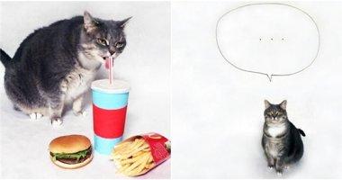 Chú mèo cosplay Pusheen đáng yêu đốn tim cộng đồng mạng