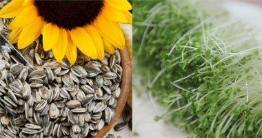 """7 thực phẩm """"vàng"""" có thể thanh lọc và đào thải độc tố cho cơ thể bạn"""