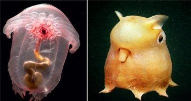 Những sinh vật bạn không tin là có thật trên Trái Đất