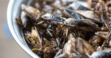 Ghé chợ côn trùng, thử lòng can đảm